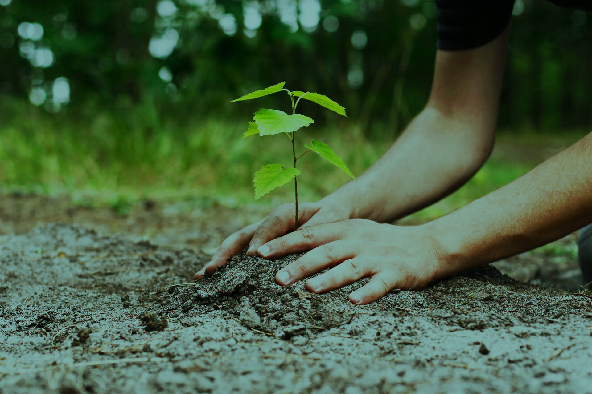 Evergreen Credit Union plants a tree for every member that joins.